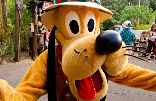 Dogs Now Welcome at Four Disney World Hotels | Frommer's