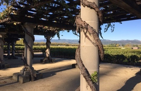 Wine Country Report: Despite Fires, Napa and Sonoma Visitor Experience is Undamaged | Frommer's