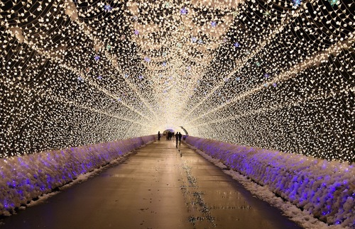 Huge Nature-Themed Light Show Illuminates Winter Nights in Japan | Frommer's