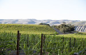 Buellton, CA vineyards