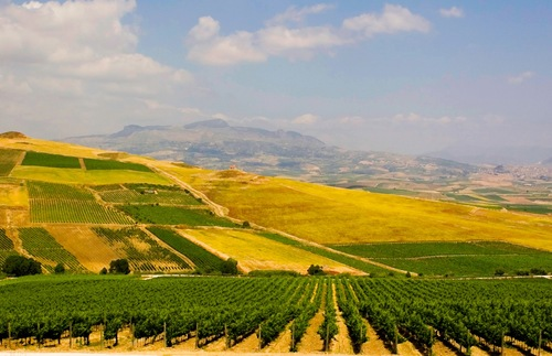 Sicily vineyards