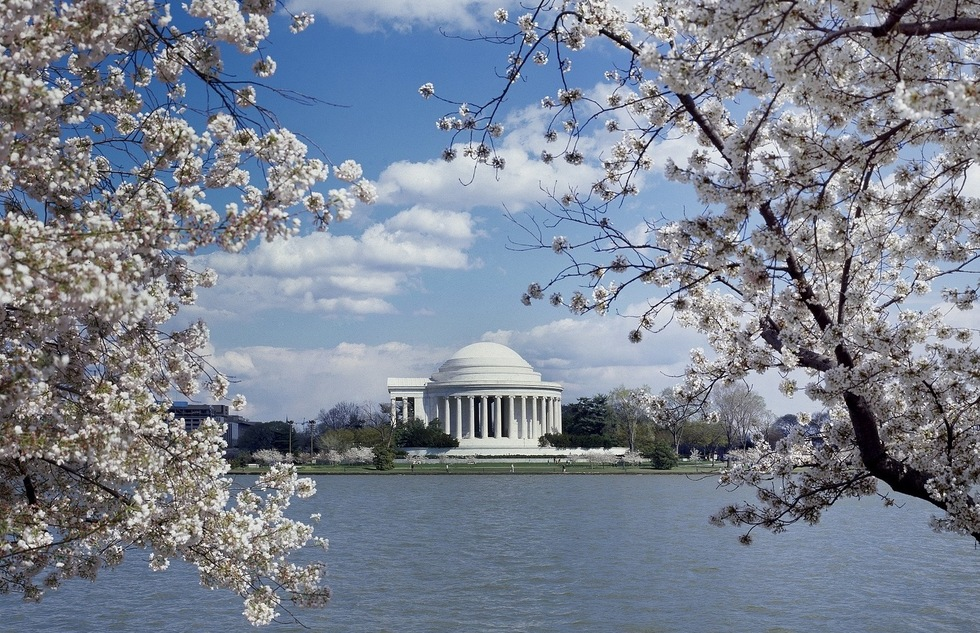 Cherry blossoms frame the Jefferson Memorial in Washington, D.C.