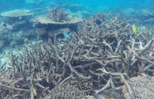Dead corals along the Great Barrier Reef in Australia