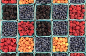 Berries for sale in Los Angeles