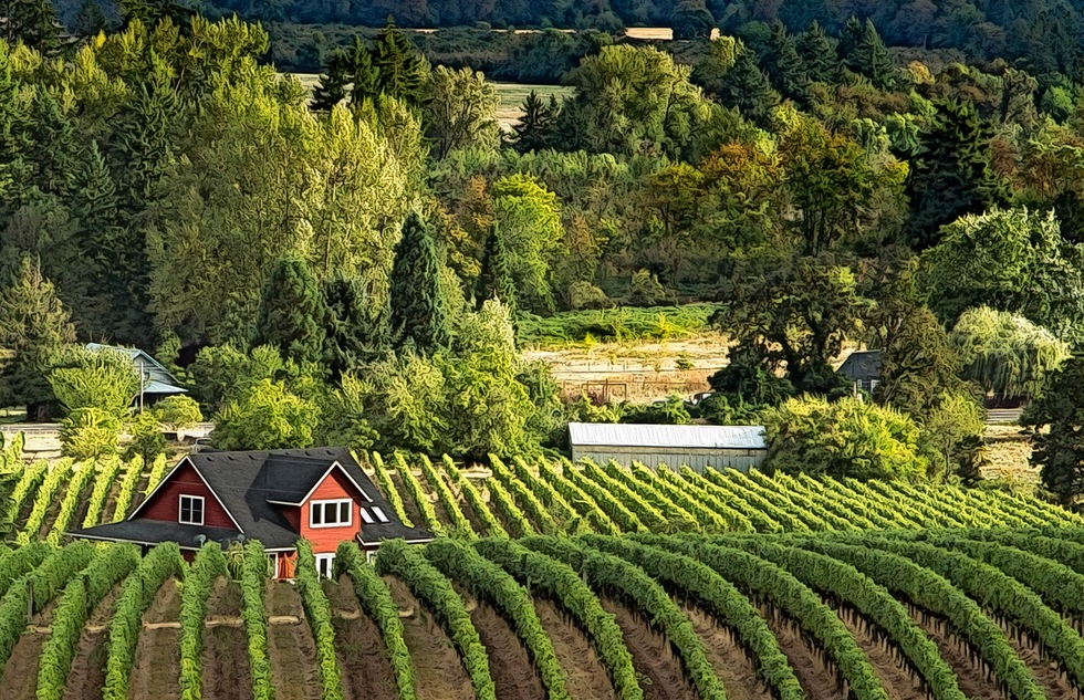 Oregon's Willamette Valley