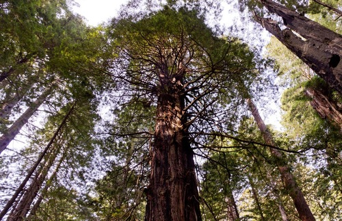 Best Of The Redwoods 10 Tip Top Things To See Around