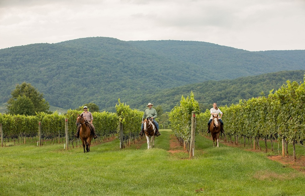 Wine Tasting Tour Experiences: Horseback riding in Virginia