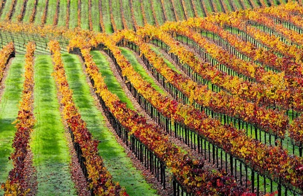 Wine Tasting Tour Experiences: Hiking in Sonoma County