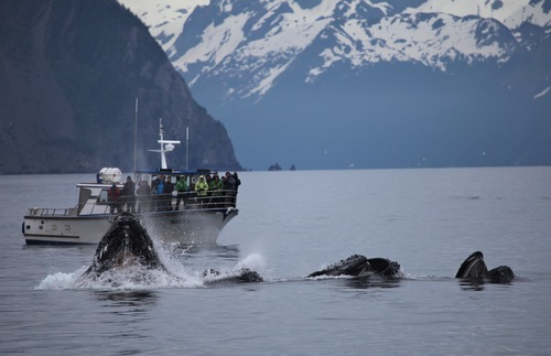Which Alaska national parks are the best? Kenai Fjords National Park: What to Do