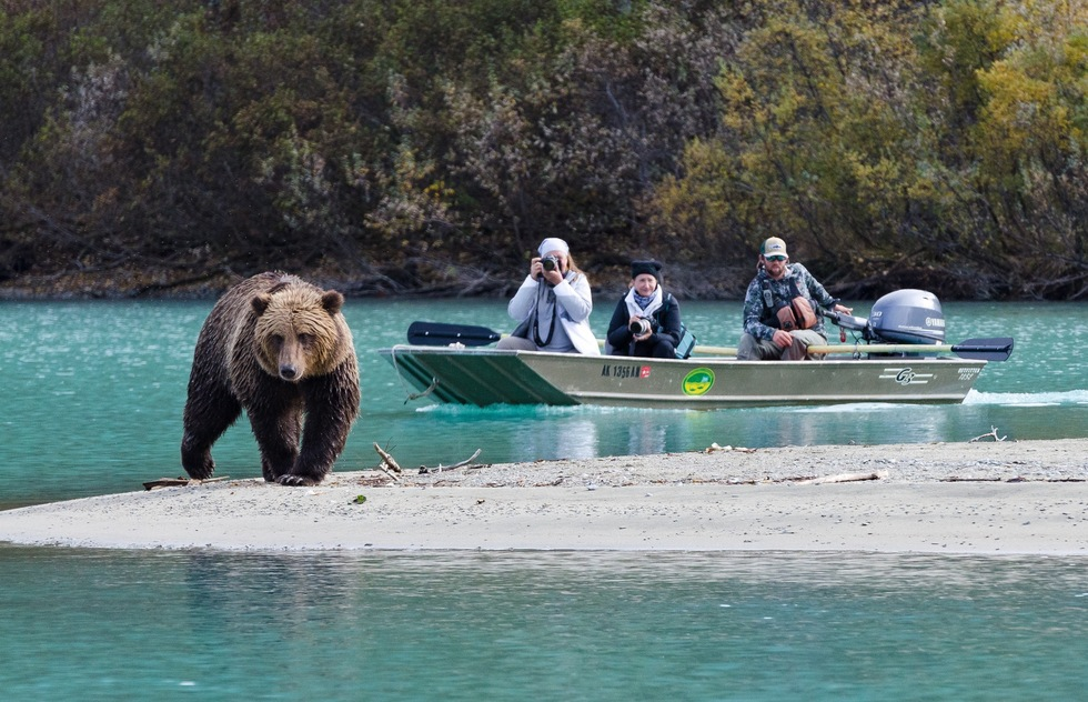 "What to do in Alaska in summer: Spot the ""Big Four"""