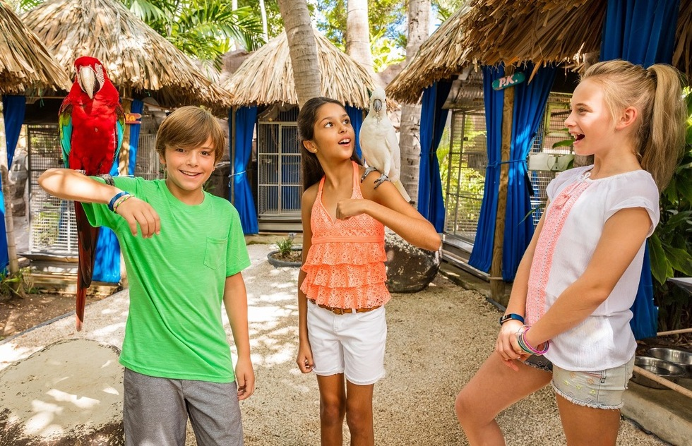 Best resorts for families in the Caribbean and the Bahamas: Hilton Aruba Caribbean Resort & Casino, Aruba