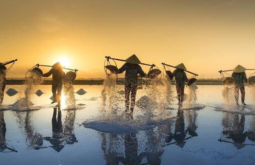 Salt harvesting in Vietnam
