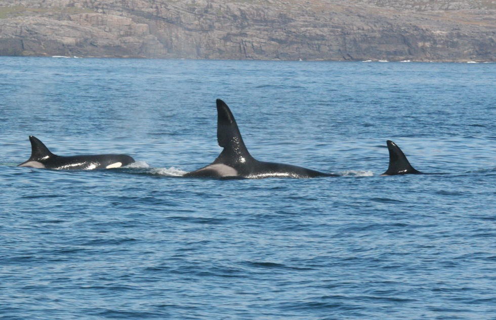 Spot Orcas and Dolphins Along Western Scotland's New Whale Trail | Frommer's