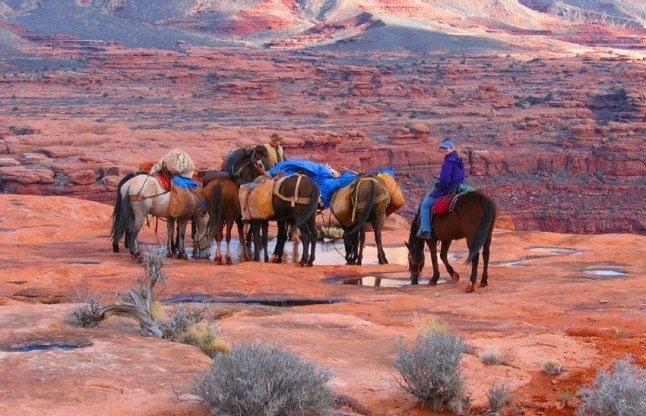 10 Top Grand Canyon Experiences and Tours: Take a Horseback Trail Ride