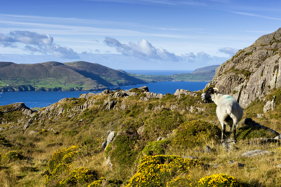 The Best Hikes in Ireland: Beara Way, County Cork and County Kerry