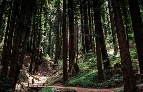 Redwoods, Beer, and Bigfoot: Exploring California's Santa Cruz Mountains | Frommer's