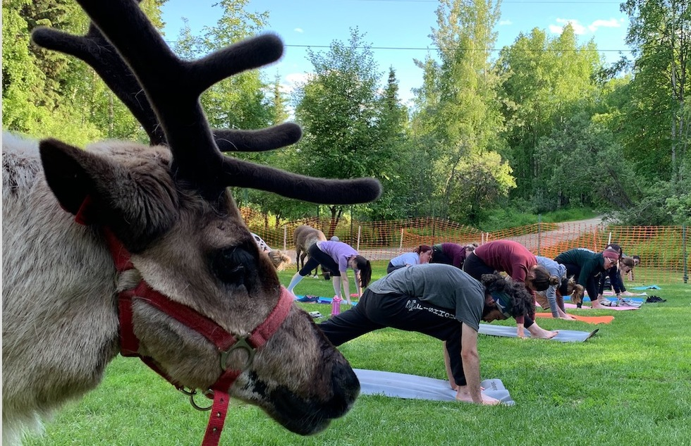 What Do Reindeer Do in the Summer? Attend Yoga Classes, Apparently. | Frommer's
