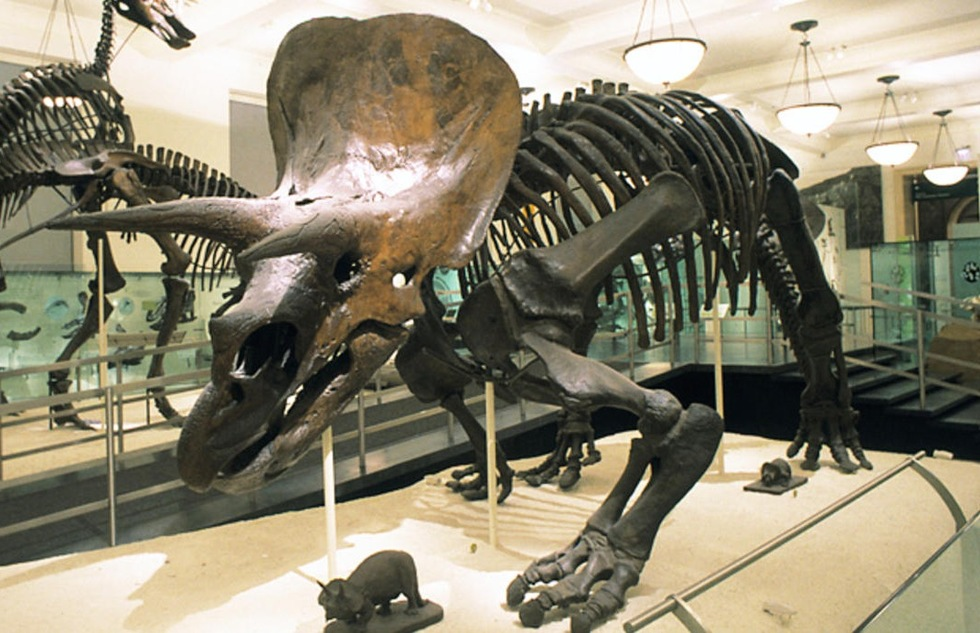 Best Dinosaur Museums and Attractions for Kids and Families: American Museum of Natural History, New York City