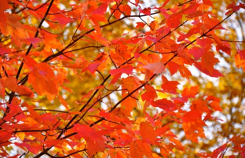 Will Fall Foliage Be Worth Seeing This Year in New England? Here's An Expert's Forecast | Frommer's