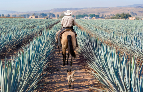 Tequila Tourism and Beyond: Get to Know Mezcal in Mexico