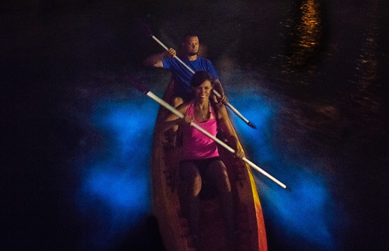 12 Islands to See by Kayak: Bioluminescent Bay, Grand Cayman Island