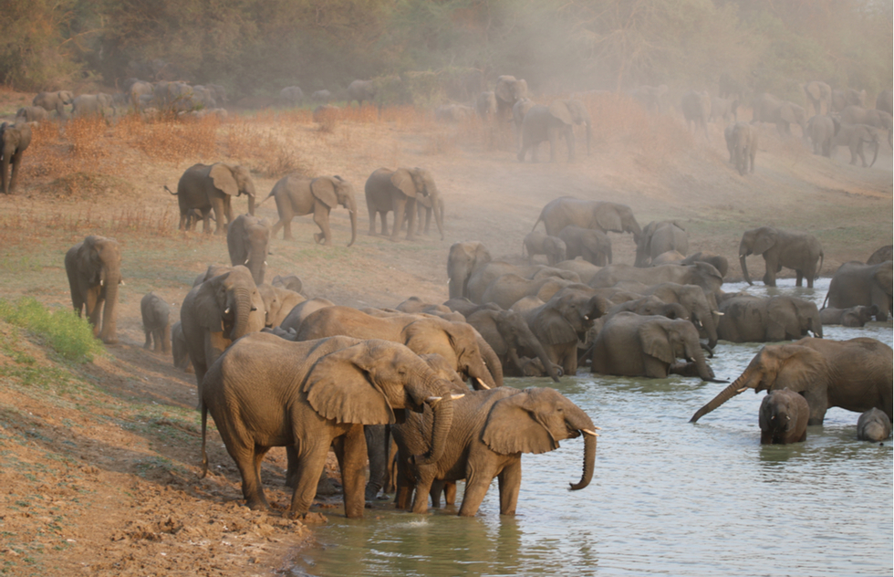 Elephants at Zakouma National Park in Chad