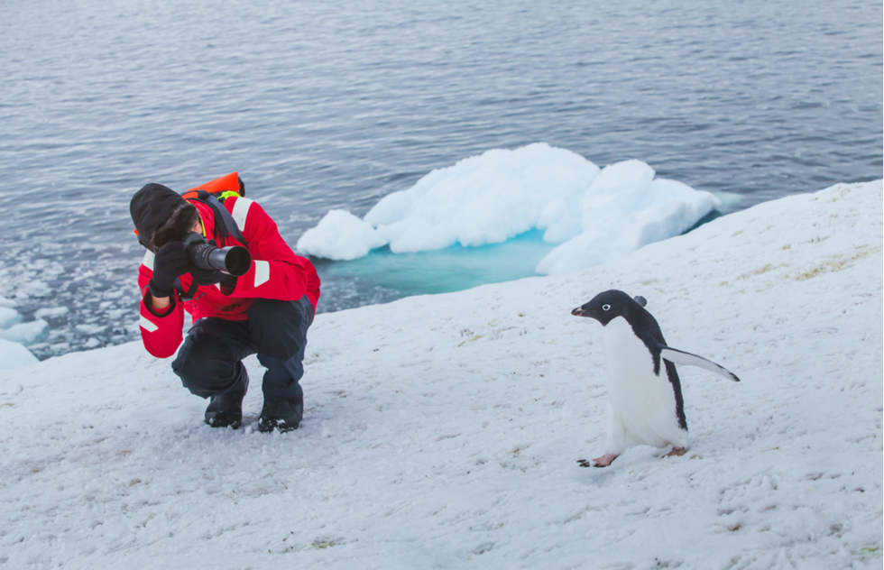 Photographing a penguin in Antarctica