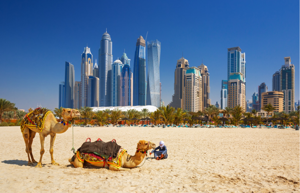 Camels and skyscrapers in Dubai