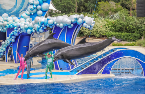 Trainers Will Stop Riding Dolphins at SeaWorld | Frommer's