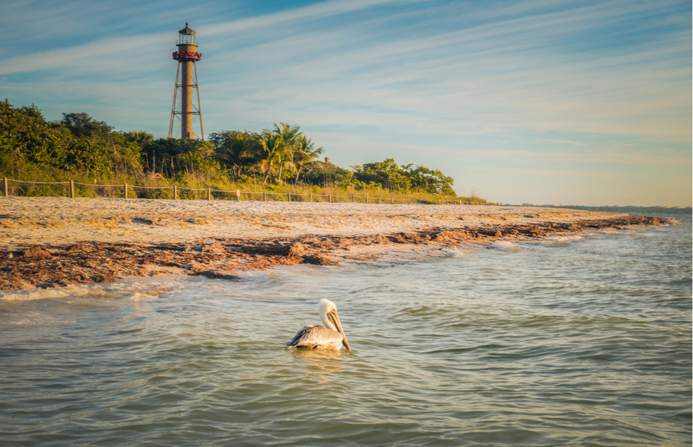 A First Timer S Guide To Sanibel Island