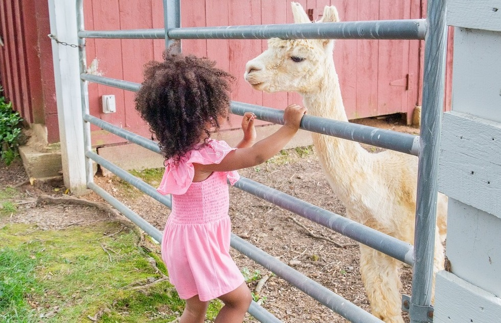 Visiting an alpaca at Tusculum Farm in Gaithersburg, Maryland