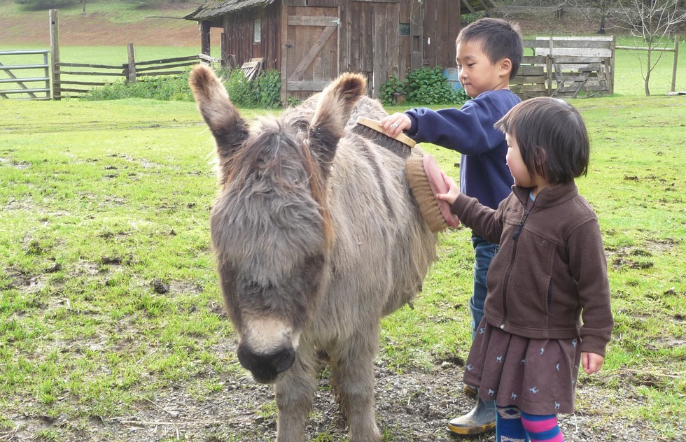 Brushing a donkey at Leaping Lamb Farm in Oregon