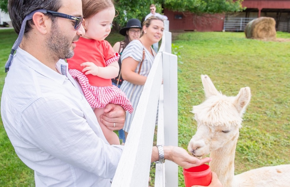 Feeding an alpaca at Tusculum Farm in Maryland