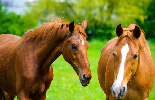 Visit Kentucky Horse Farms with New Virtual Tours