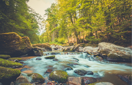 Listen to These Soothing Nature Sounds When You Can't Explore Outdoors | Frommer's