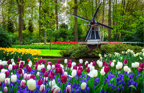 Ja, Tulips Are Still Blooming in the Netherlands! See For Yourself | Frommer's