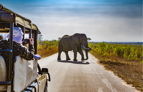 New Website Helps You Plan Wildlife Spotting on African Safaris | Frommer's