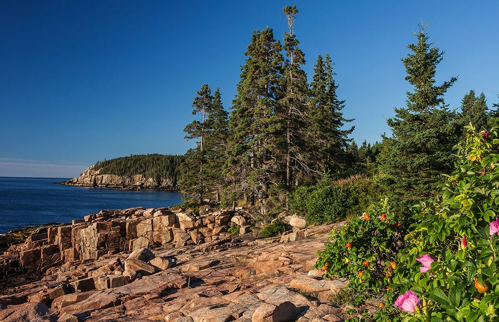 Best national park scenic drives: Acadia National Park in Maine