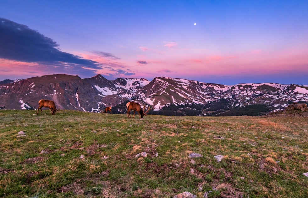 Best national park scenic drives: Elk at Rocky Mountain National Park in Colorado