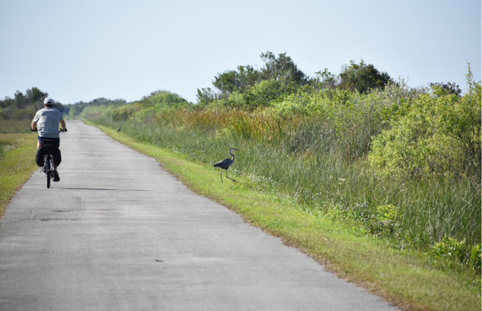 Best U.S. national parks for bicycling: Everglades National Park in Florida