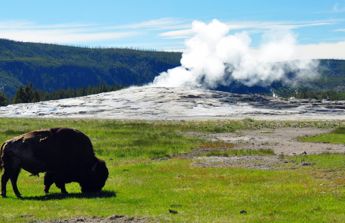 Where to See Yellowstone's Most Impressive Animals: Bears, Bison, and Beyond | Frommer's