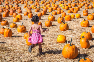 The pumpkin patch at Underwood Family Farms in Moorpark, CA