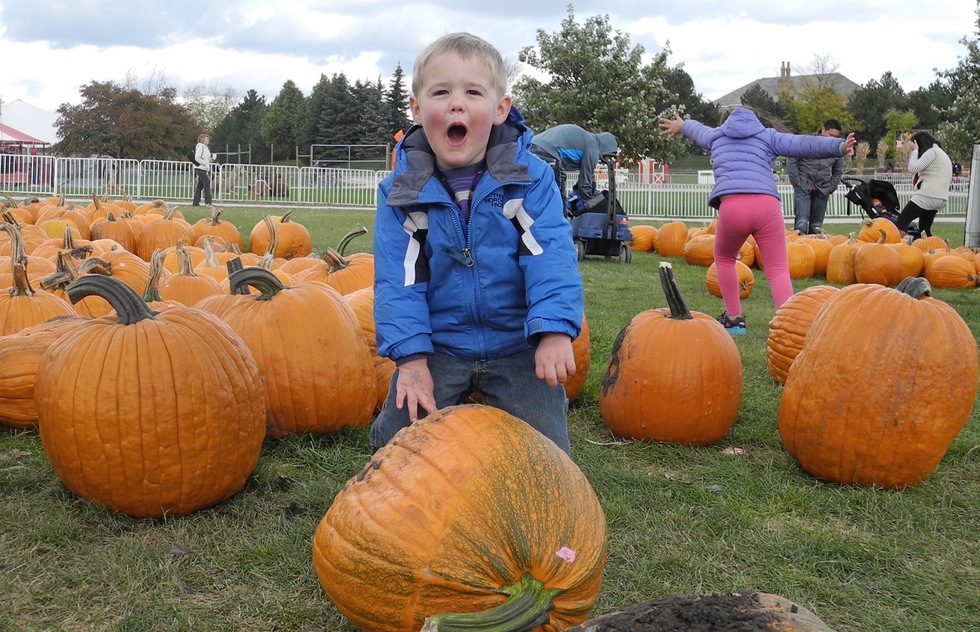 A young boy finds his pumpkin at Goebbert's Pumpkin Patch in Illinois