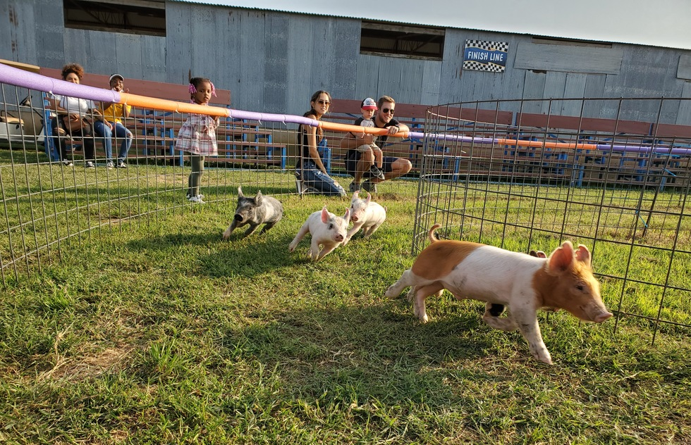 Piglet racing at Klausmayer Dairy Farms and Pumpkin Patch