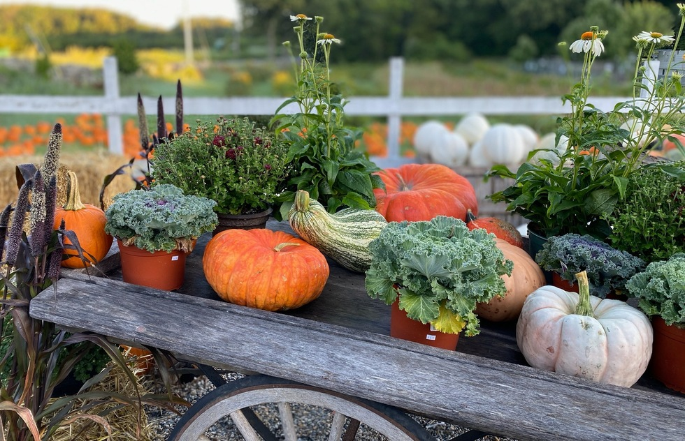 A seasonal display at Smolak Farms in Massachusetts
