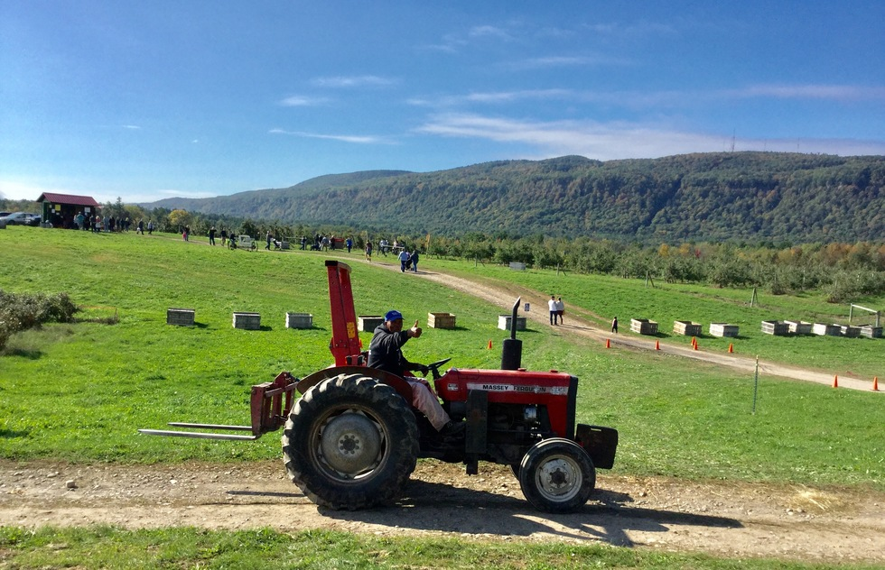 A farmer on a tractor greets visitors at Indian Ladder Farms in New York.