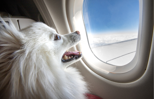 It's Official: Emotional Support Animals Can No Longer Fly Free | Frommer's