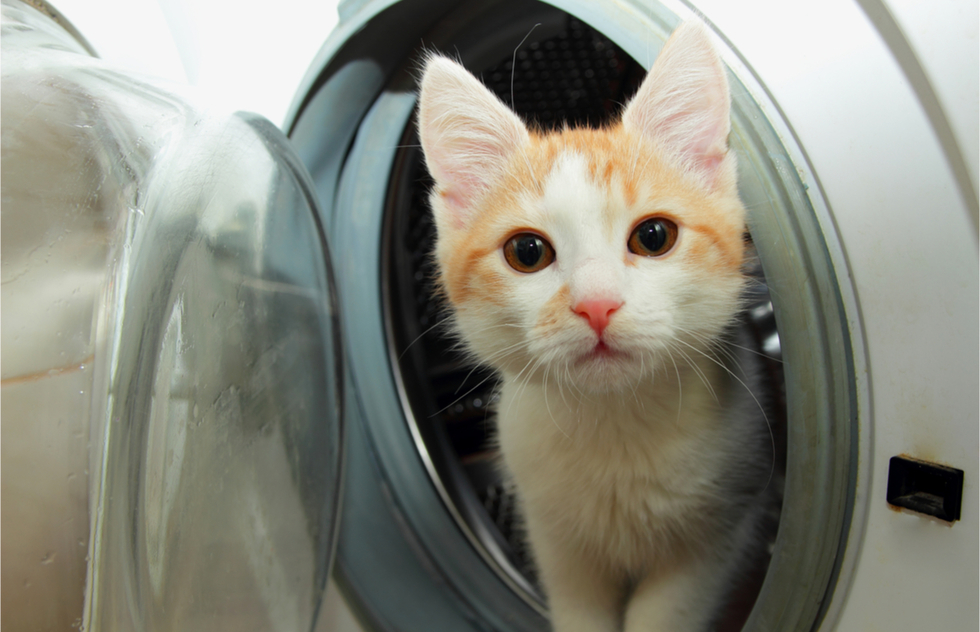 Stray Cats and Washing Machines: Memories of Inspired Kindness | Frommer's