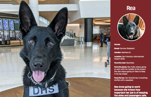 Download TSA's Free 2021 Calendar of Airport Security Dogs | Frommer's