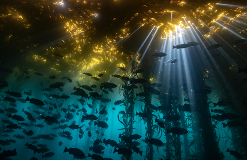 2020's Best Underwater Photos: Dive into the Wondrous World Below | Frommer's
